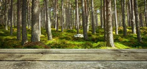 Terasa s dřevěnou podlahou