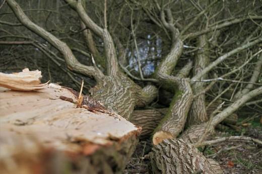Roden Cut Tree Wood Clearing - Carola68 / Pixabay