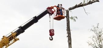 Sawing Tree Birch Chainsaw On High  - photochur / Pixabay